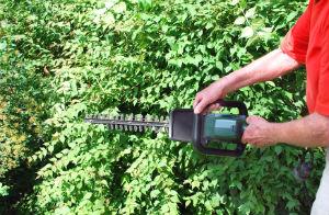 hedge-trimming-balham